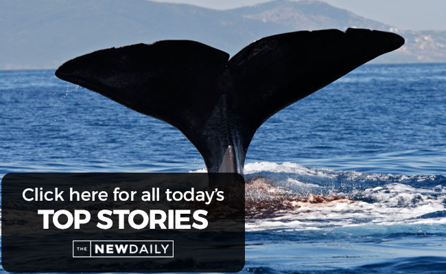 top-stories-whale