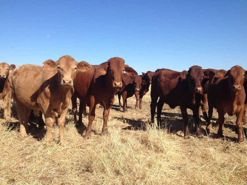 S Kidman and Co is Australia's largest private landholder.