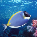 finding dory fish