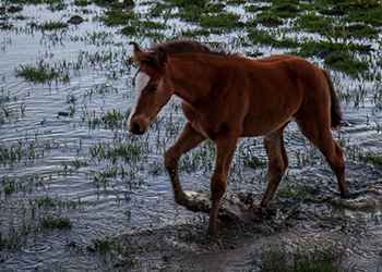 The study found the new climate was too wet for the army's horses. Photo: Getty