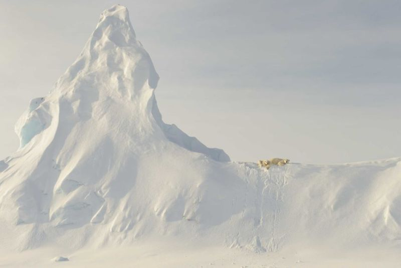 Nature Honourable Mention — Bears on a Berg