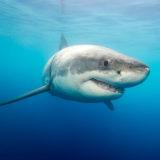 Shark attack in New Caledonia