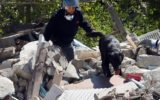 italy earthquake dogs