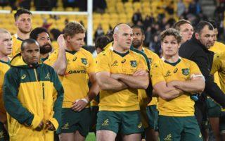 wallabies rugby bledisloe