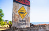 shark sightings