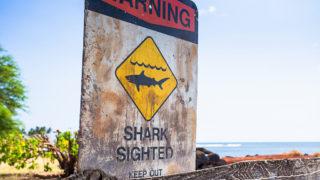 shark sightings