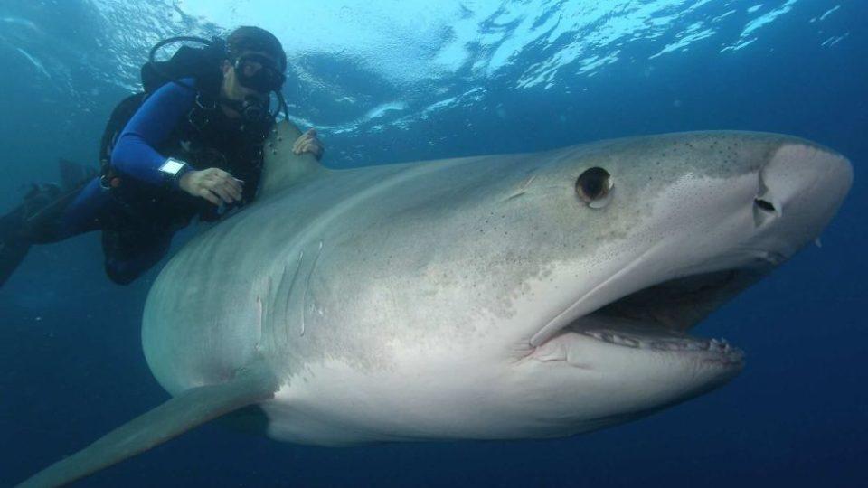 shark attack Queenscliff