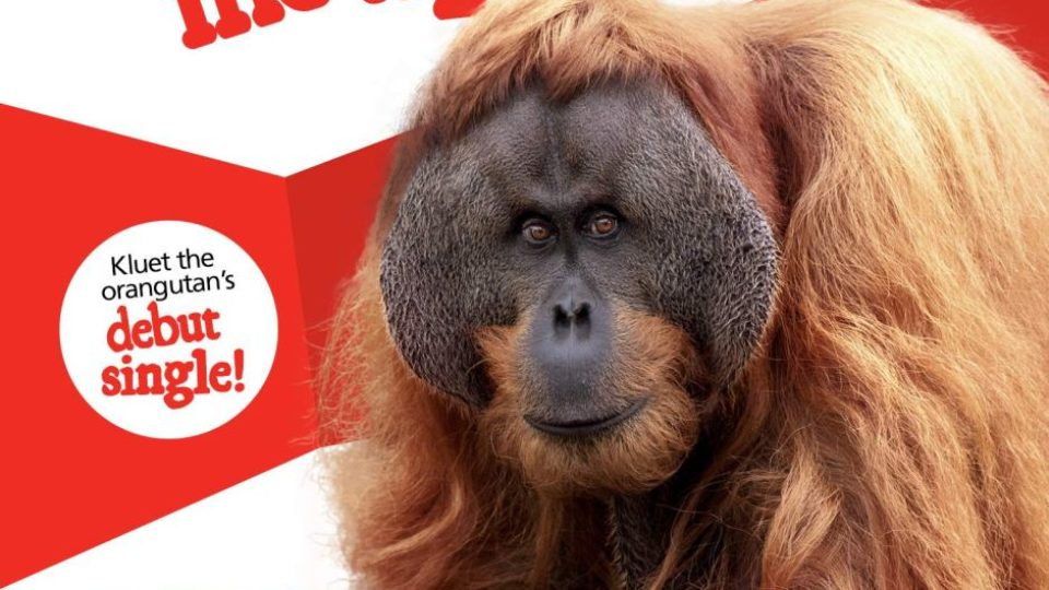 Kluet the Orangutan releases debut single
