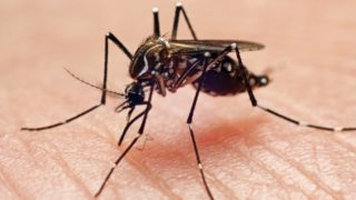 Scientists believe mosquitoes carrying this flesh-eating bug are on the increase in Australia.