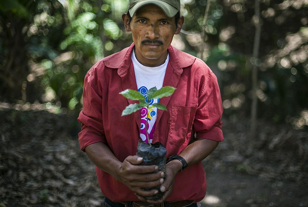 Climate change may halve coffee-growing area
