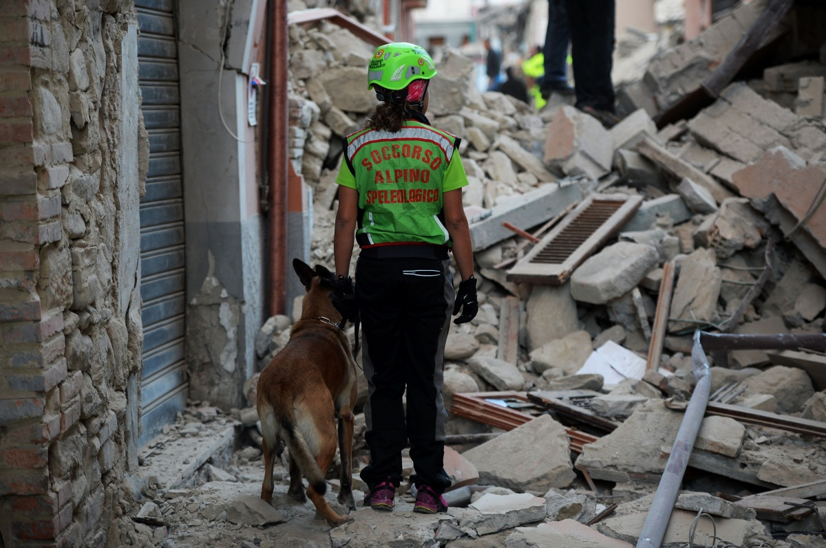 italy earthquake rescue dogs