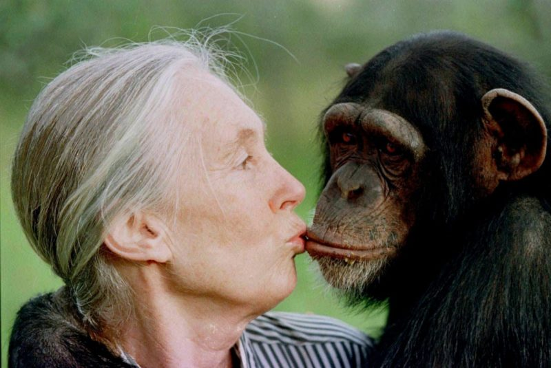 Jane Goodall on Trump
