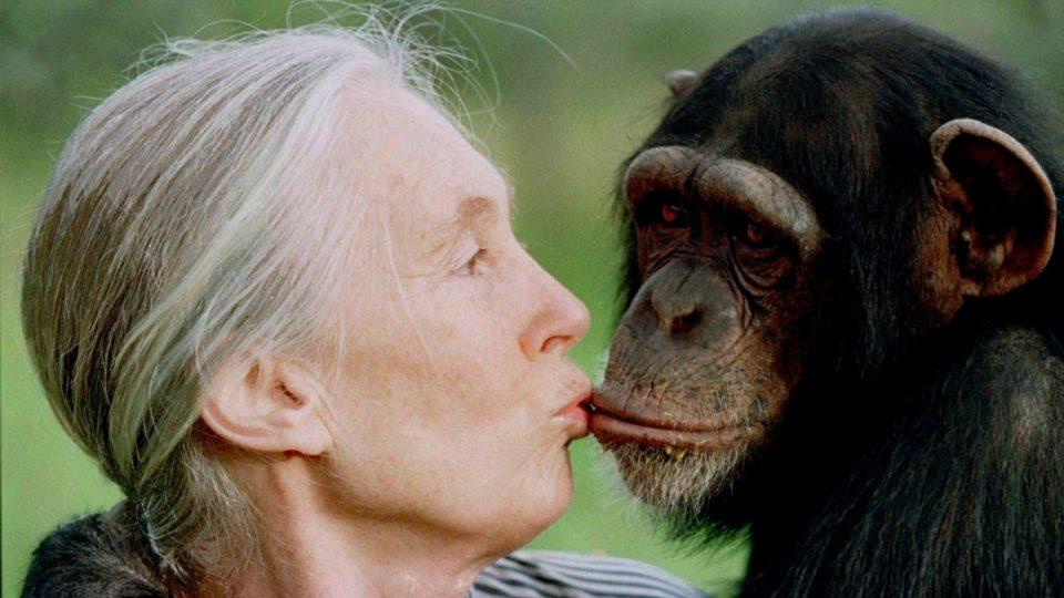 Jane Goodall on Trump