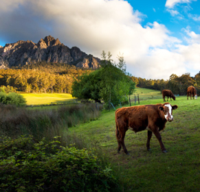 Tasmania farm. Photo: Getty