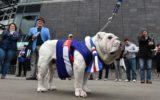 Bulldog Sid