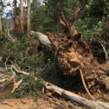Tree down in Belgrave