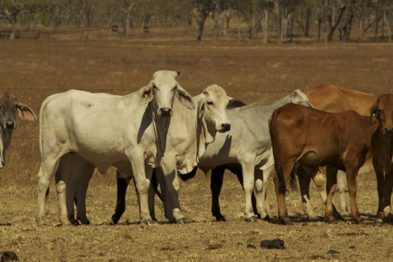 Buy yourself a slice of the beef industry. Photo: Getty