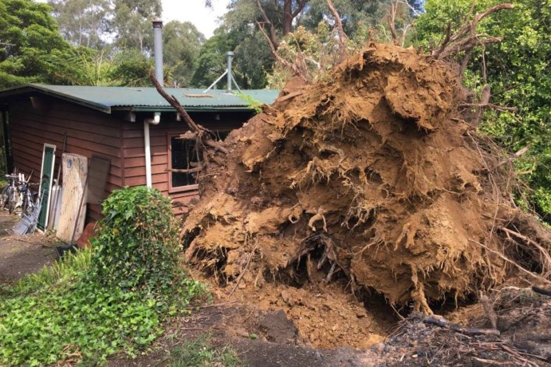 A woman died after a tree crashed through her house at Millgrove.
