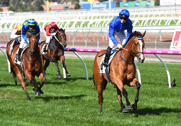 cox plate tips