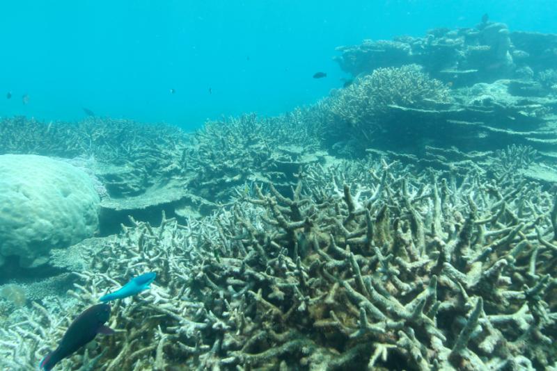Pauline Hanson Reef visit