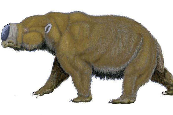 megafauna Diprotodon