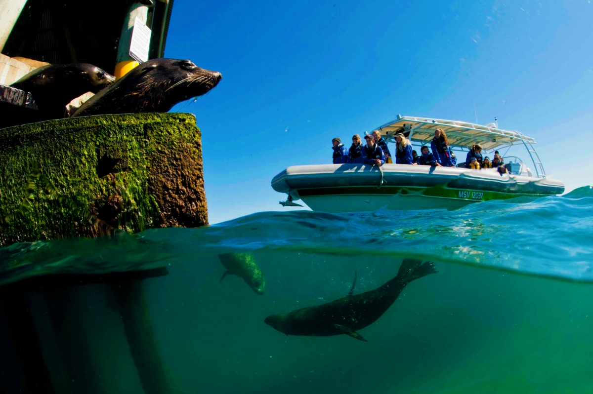 bellarine peninsula boat tours