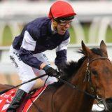 almandin horse