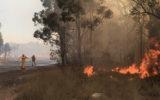 Sydney fire