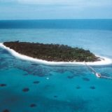 Coral die off record
