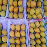 mango shortage