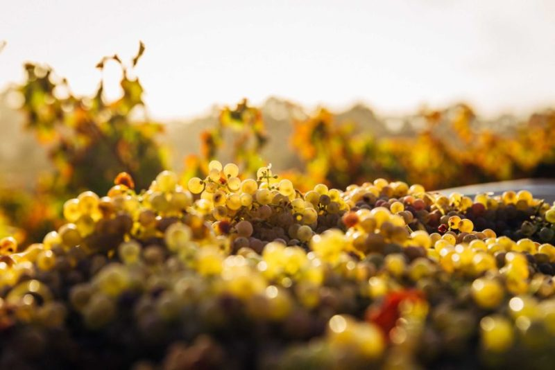 wine climate