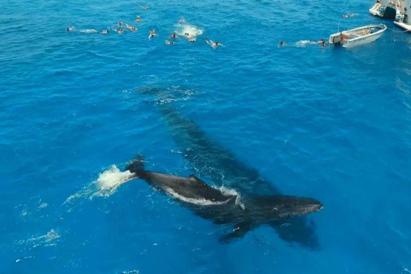 Mermaid Reef whales