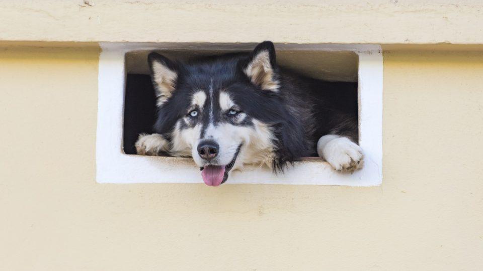 dogs pets mental illness
