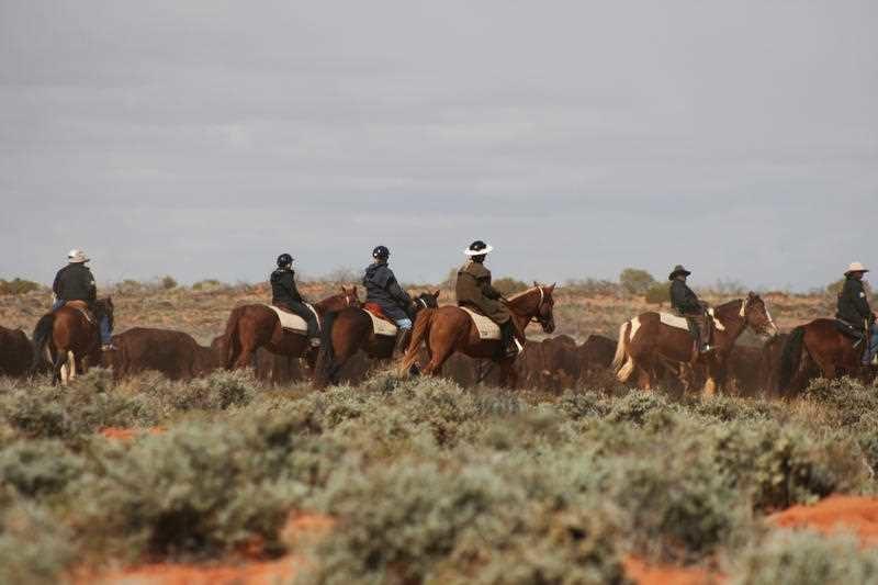 Kidman cattle property