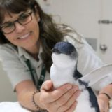 Penguin at Taronga Zoo