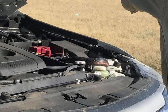 snake appears on woman's windscreen