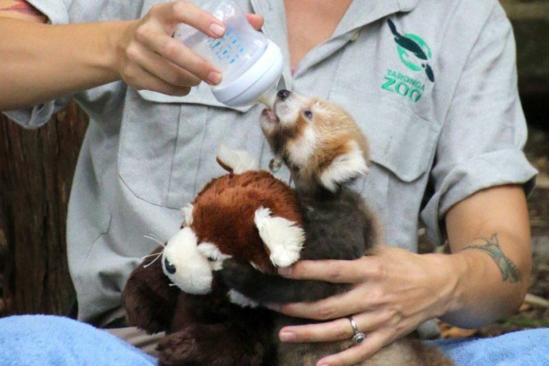 Maiya with zookeeper Tamara Gillies