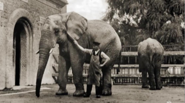 Old school zoos