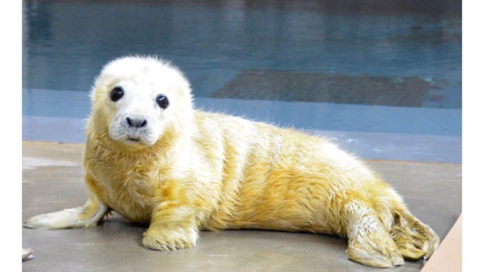 cute animal twitter challenge seal pups