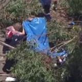 Tree falls on students