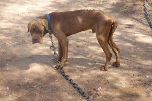 Puppy farm raid Queensland