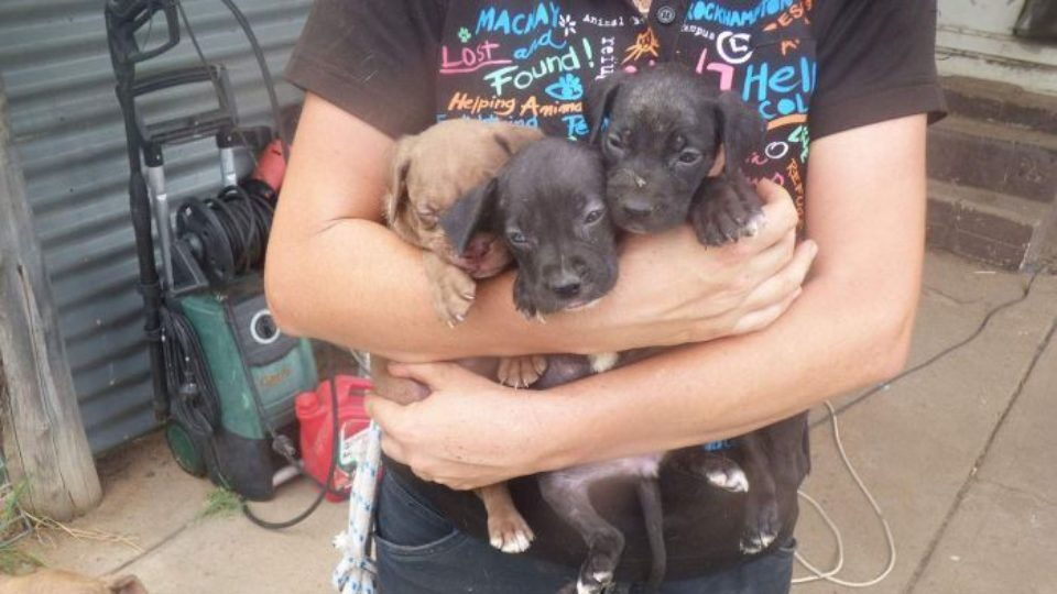 Queensland puppy farm