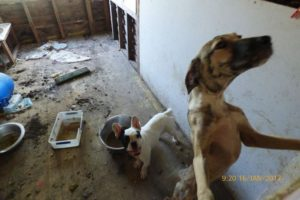 Queensland puppy farm raid