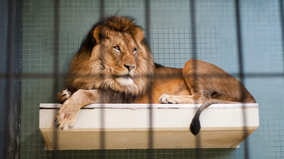 Are zoos good or bad? New documentary gets the definitive answer