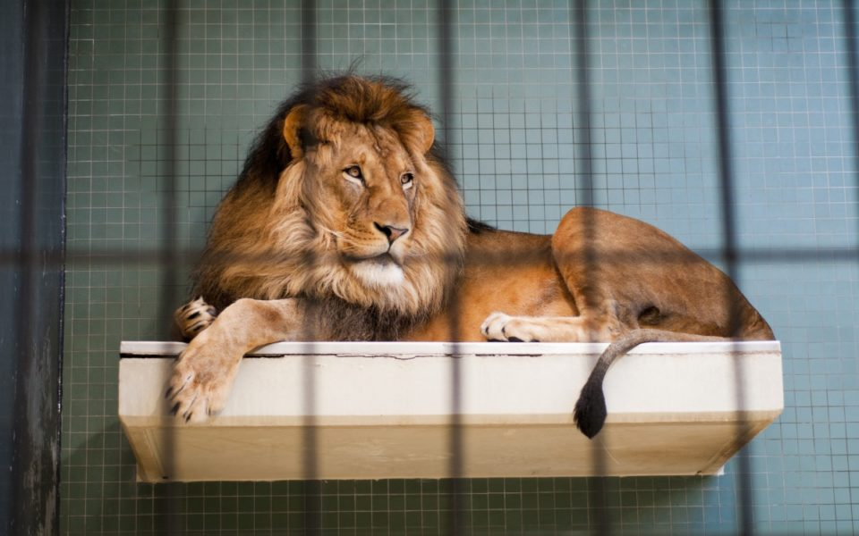 zoos are bad There are differing opinions about whether zoos are good or bad, but the most commonly accepted answer is that good zoos are a little of both as long as they promote conservation and animal welfare.