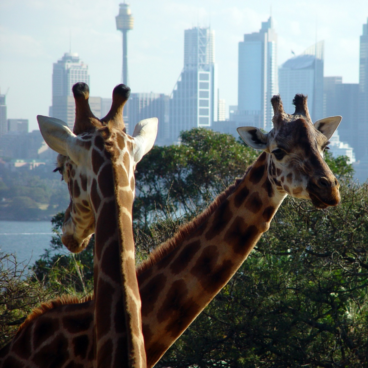 Australia's Taronga Zoo in Sydney is bound by strict standards on animal welfare. Photo: Getty