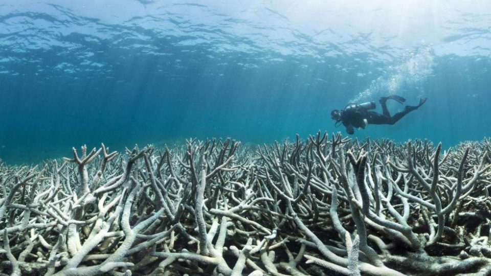 Australia to spend half a billion to protect Great Barrier Reef