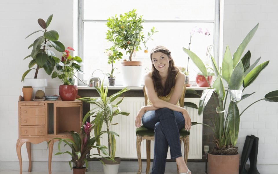 How to use indoor plants to improve your health the new daily - Plants can improve ambience home ...