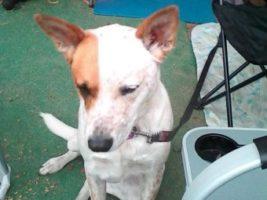 dog rescues owner