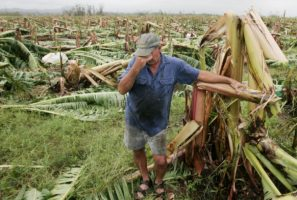 Cyclone Debbie fruit prices